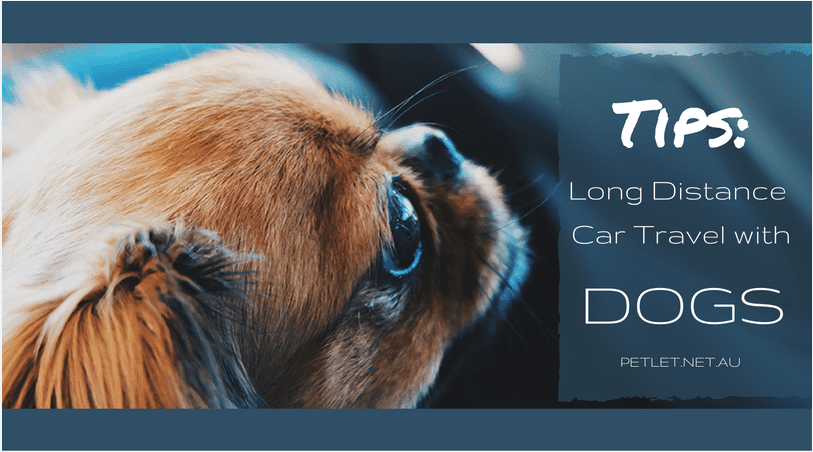 Dog Car Travel - Tips on Long Distance Car Travel with Dogs
